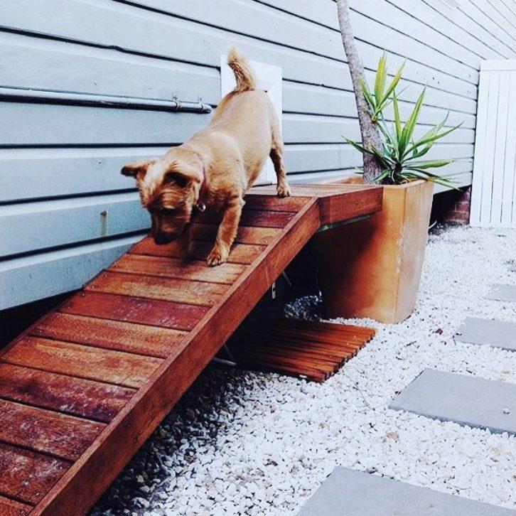 Custom doggy door - Kirra